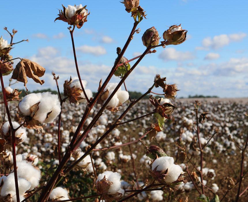 Certifications textiles : quelles différences entre les labels ?